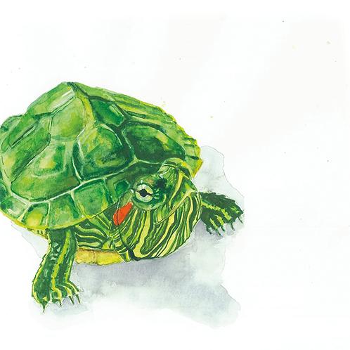 Tim T. Turtle Watercolor Print