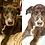 Thumbnail: Traditional Pet Portrait