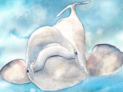 Howard Beluga Whale