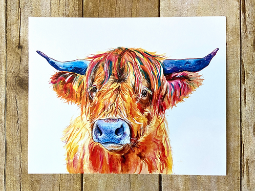 Francisco the Highland Cow