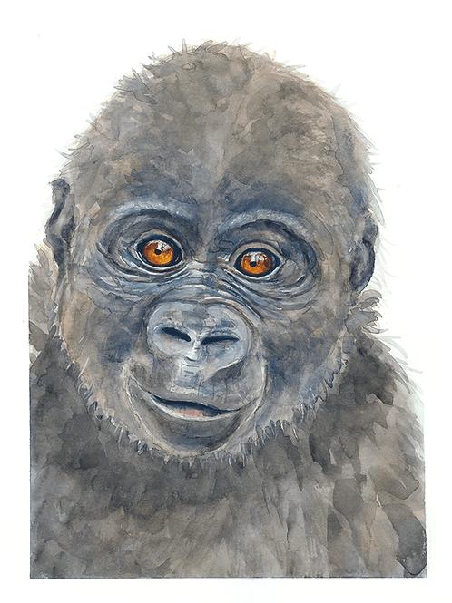 Walter Gorilla Watercolor Print