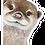 Thumbnail: Otter Magnet