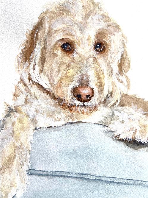 Traditional Pet Portrait