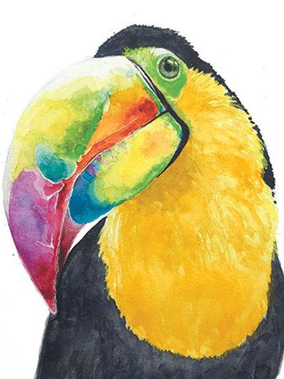 Samson Toucan Watercolor Print