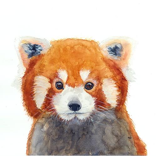Eloise the Red Panda Watercolor Print