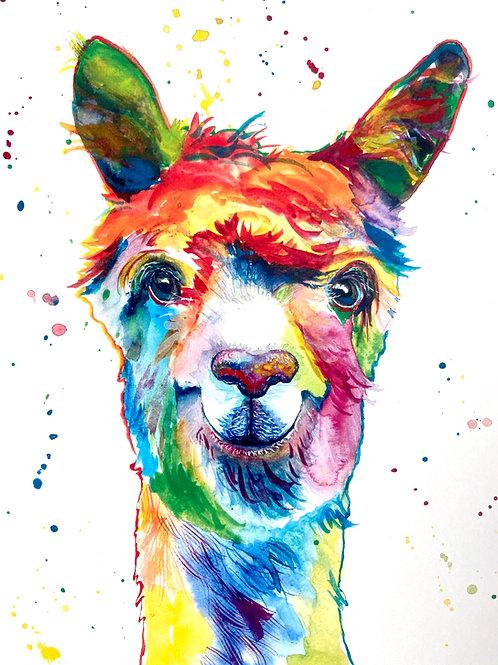 Dolly Llama