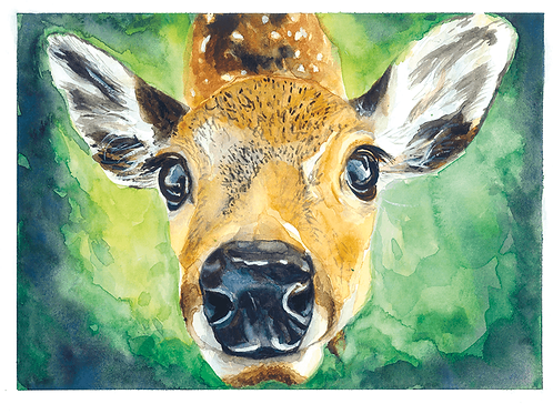 Clara Deer Watercolor Print