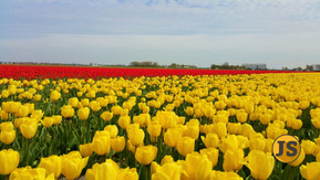 Spring in Holland!