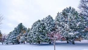 Januari - Sneeuwstorm