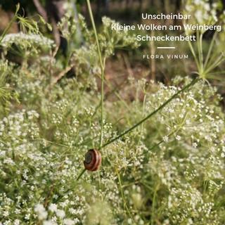 Flora_Vinum_Schneckenbett.jpg