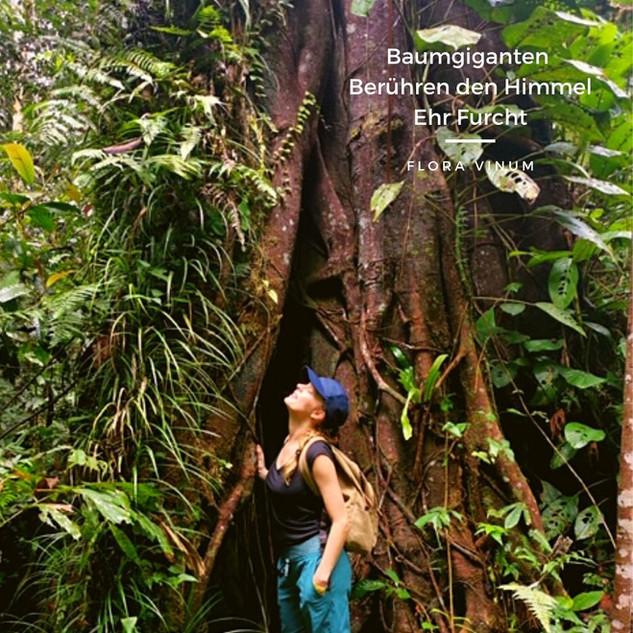 Flora_Vinum_Borneo.jpg