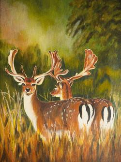 67 Rachel Underwood Fallow Deer Richmond