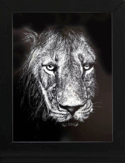44FMike Fleming Lion