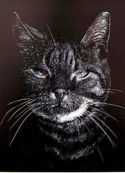 41FMike Fleming Cat