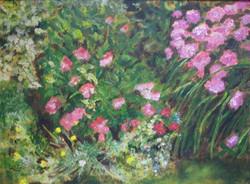 79 Sue Gray Hydrangeas