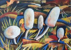 10 Barbara Verdie Fungi