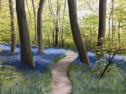 29 Jenny Beard Bluebell Wood