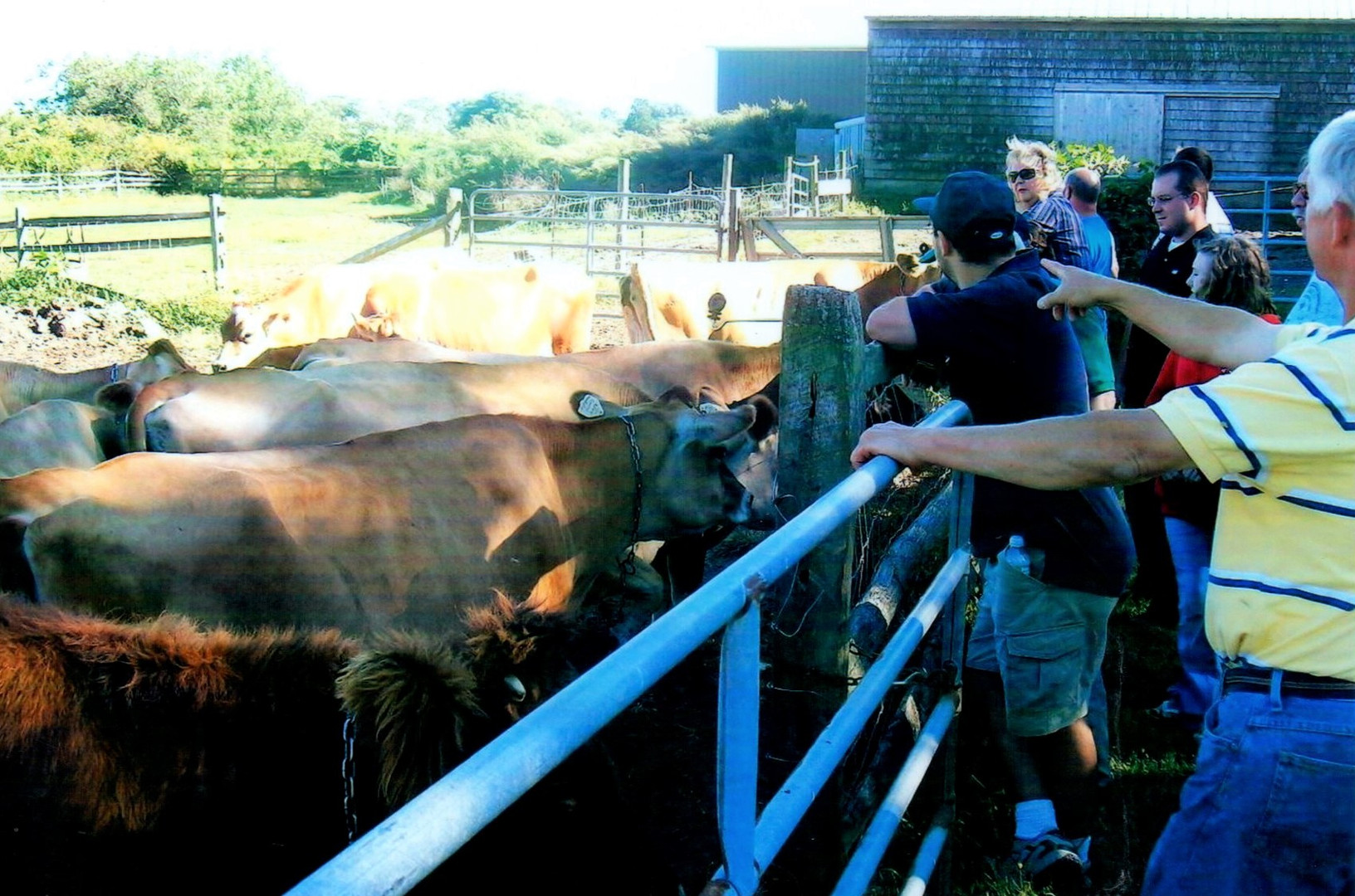Learning about cows