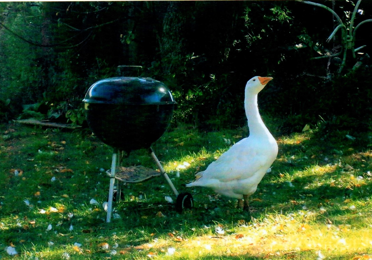 Barbecued goose