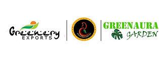 Green_aura_cc268eca-1c85-4a8c-b1b0-dd4c5