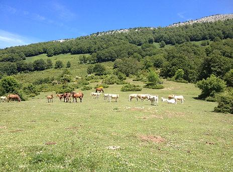 Séjour Trail - Navarre _ Lilika