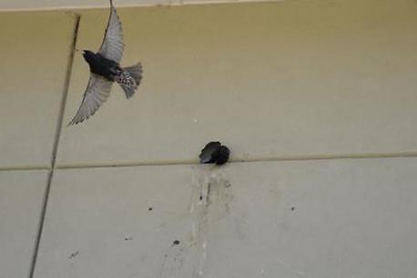 bird holes.png