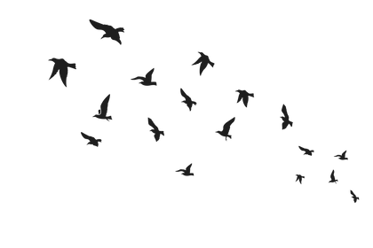 birds@3x.png