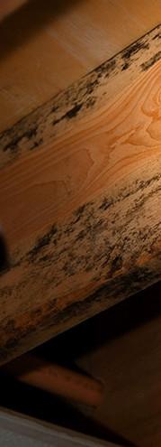 WDI Termite