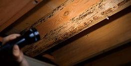 termite inspections wayne nj