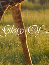 the-glory-of-africajpg