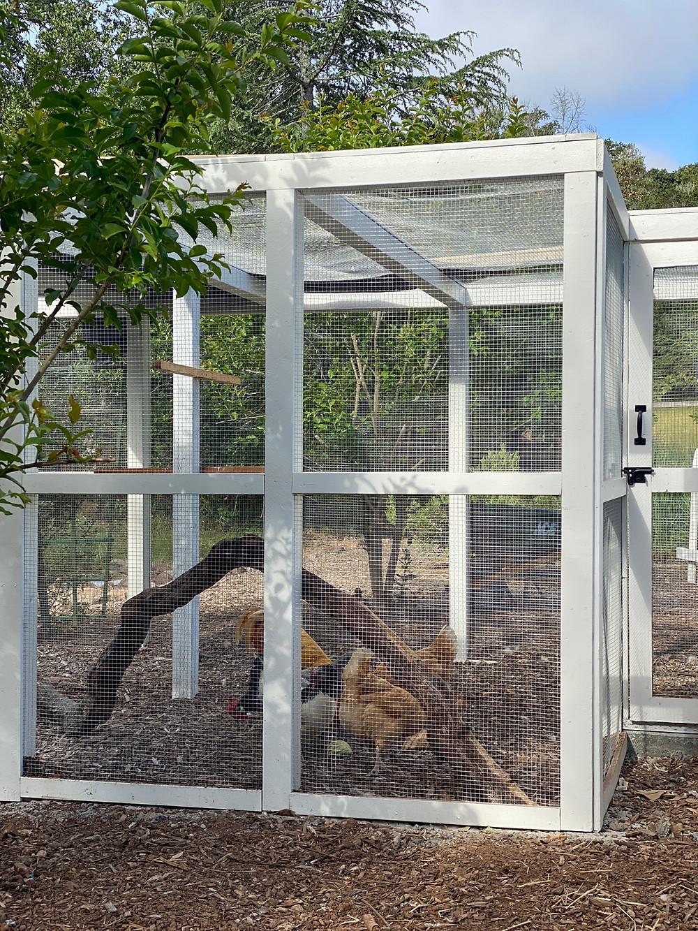 Chicken coops, chicken coop design, backyard chicken run,New chicken coop and run at Rock Haven Farm.