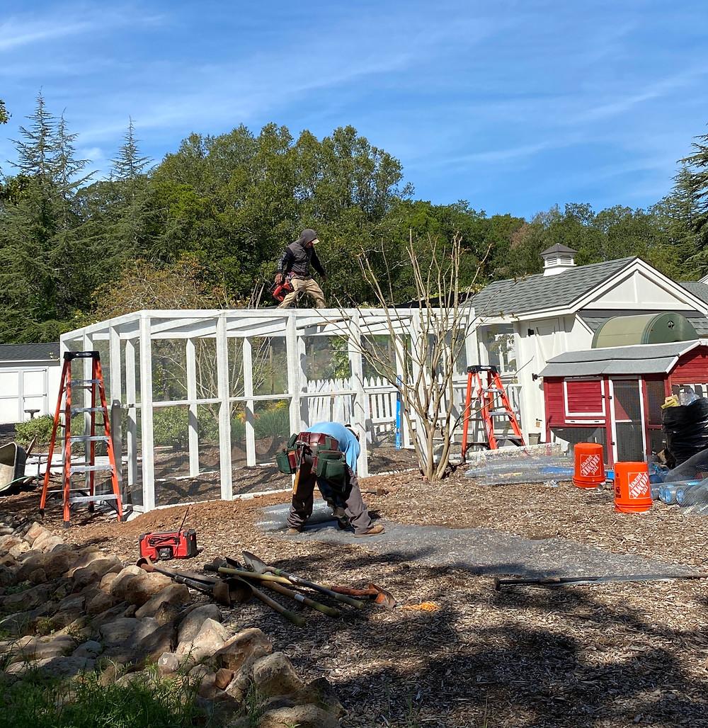 Chicken coops, chicken coop design, backyard coops, Rock Haven Farm chicken coop construction.
