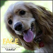 face-dog.jpg