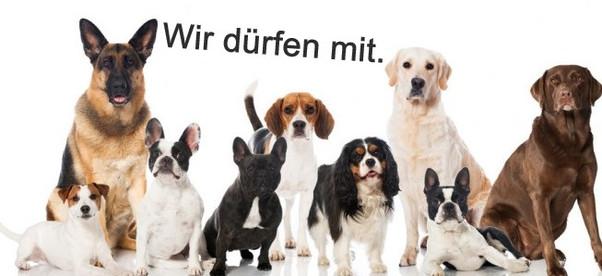 rassehunde_hunderassen-678x381_edited.jpg