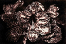 Iron Butterfly  Violet -Pen & ink
