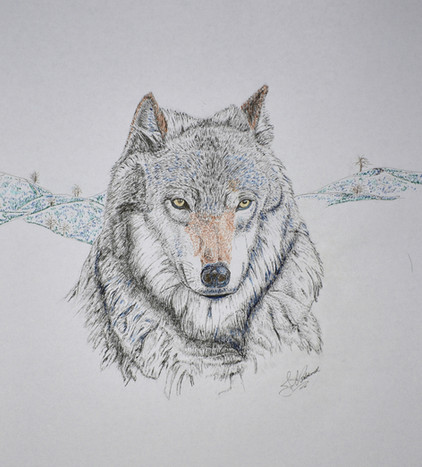 THE WOLF - Colored Ink & Pen