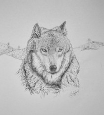 THE WOLF-B&W - Pen and Ink