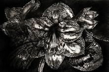Iron Butterfly  Silver -Pen & Ink