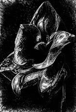 Amaryllis in Contrast - Silver  - colored ink and pen.jpg