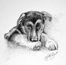 Lucky - Pen and Ink