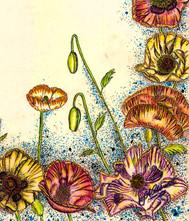 Poppies -Pen & In Mixed Media.jpg