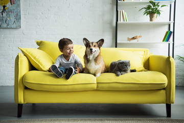 Did You Design Your House Around Your Pet?