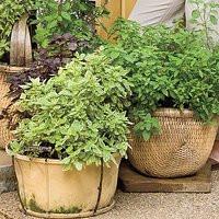 Lush Herb Gardens Ideas