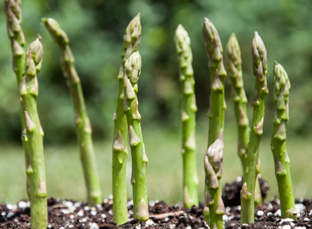 Six Best Vegetables to Plant in Early Spring