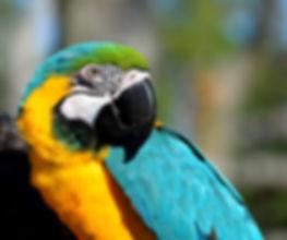 macaw-2868308.jp