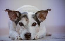 dog-2810484.jp