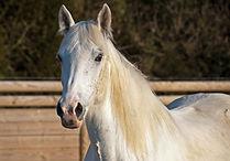 horse-2107722_edited.jpg