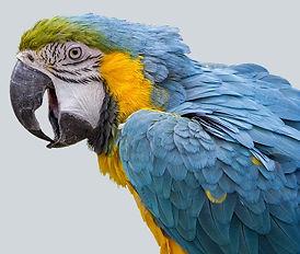 parrot-3089349_640_edited.jpg