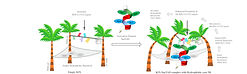 Graphical-Abstract-7.jpg