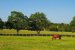 Brenham working ranch